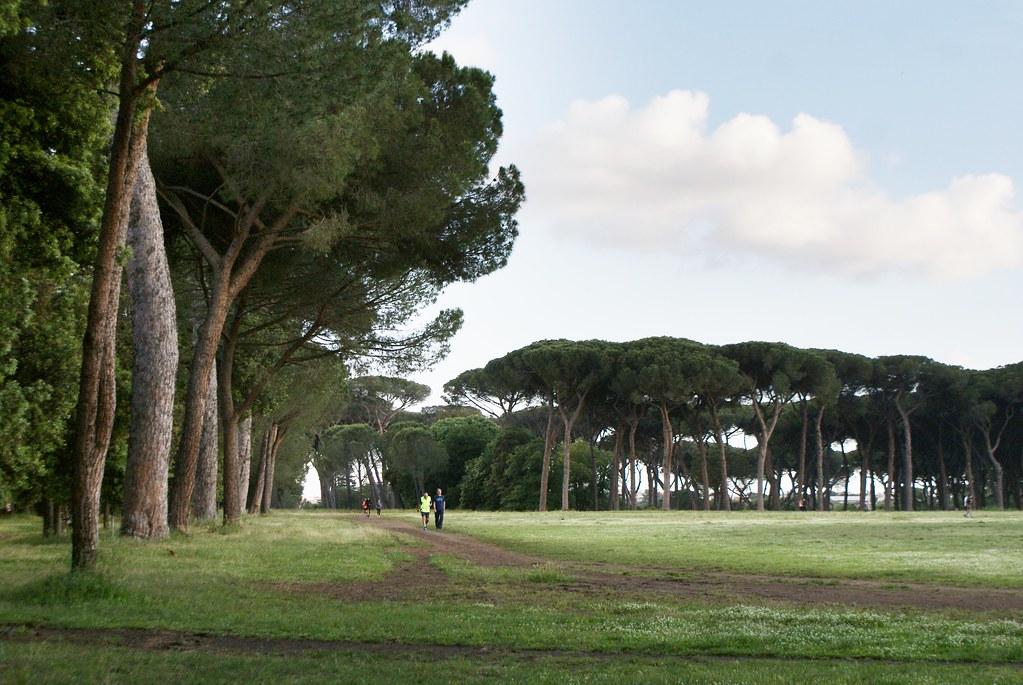 Pinède et joggers dans le parc de la Villa Doria Pamphili à Rome.