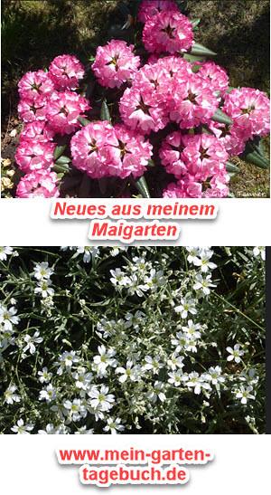Maigarten