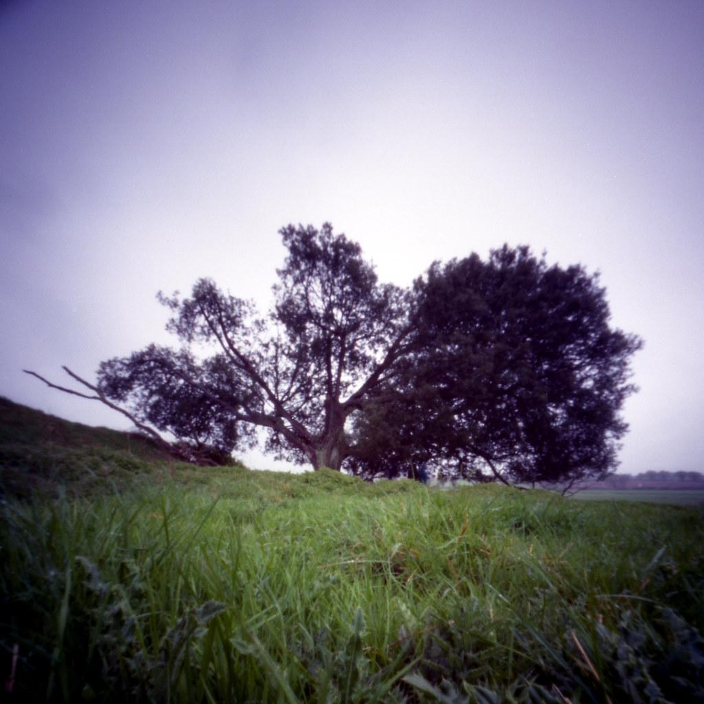 Warham Tree 1