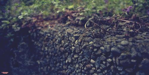 availablelight bokeh closeup color devotional existinglight nikkorlens nikon nikond810 nikonfx outdoors plants stone texture wall spokane washington unitedstates 992