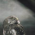 20180429-152549 - Bird Bokeh