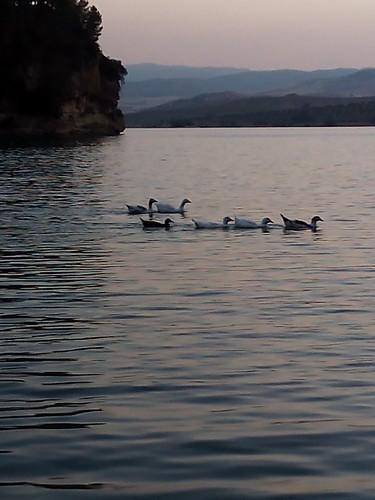 Patos en el chorro, Ardales (Málaga)