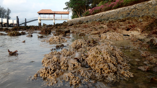 Living shores of Small Sisters' Island