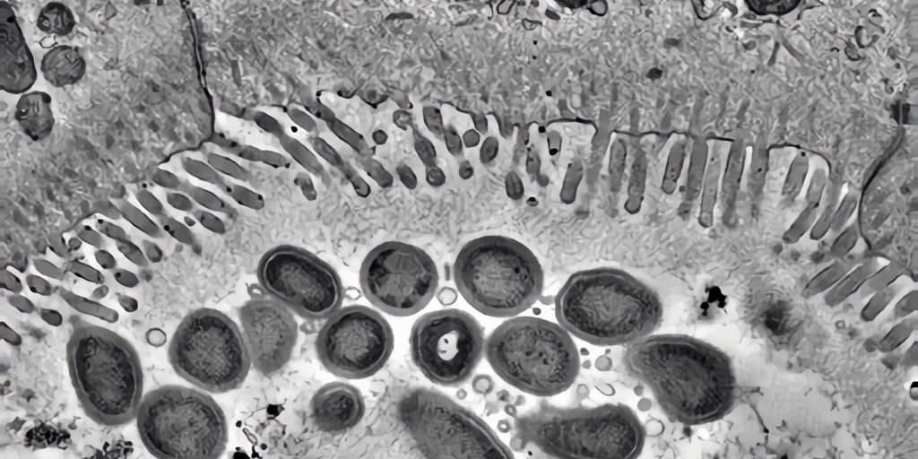 En s'enveloppant dans des anticorps une bactérie peut devenir bénéfique