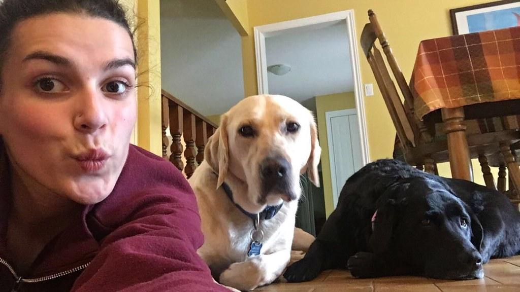 Pet Selfie - Hank, Yellow Lab & Sadie, Black Lab