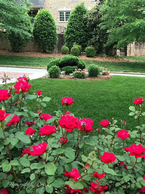 Knockout Roses-Housepitality Designs-3