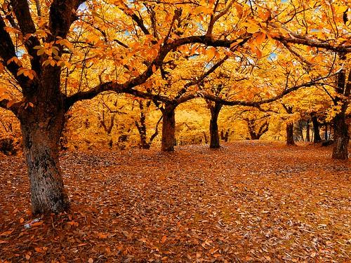 La foresta degli alberi d'oro-The forest of golden trees
