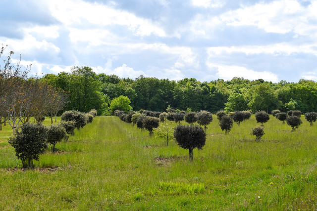 Truffle Farm Near Manoir de Malagorse, France #travel #france