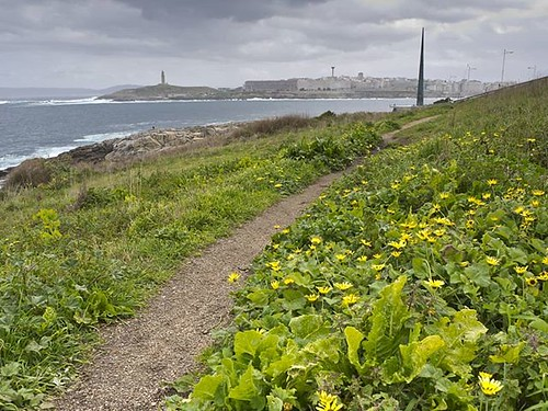 Mar, nubes y flores. #olympus #olympusomd #Coruña #spring #clouds #nubes #galifornia #galicia #flowers