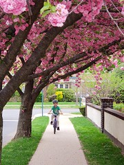 Everett Biking Under A Cherry Tree
