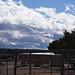 Alpacas, Santa Fe
