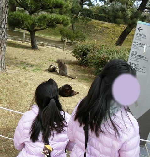 姫路城の見どころと混雑 姫路公園入口の猫