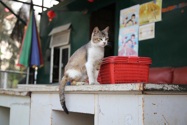 cool kitty, Canon EOS 6D, Canon EF 24-105mm f/4L IS