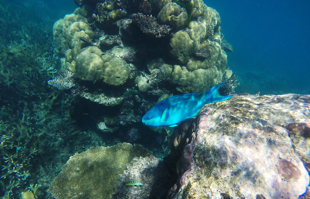 Snorkeling at the Great Barrier Reef, Queensland, Australia
