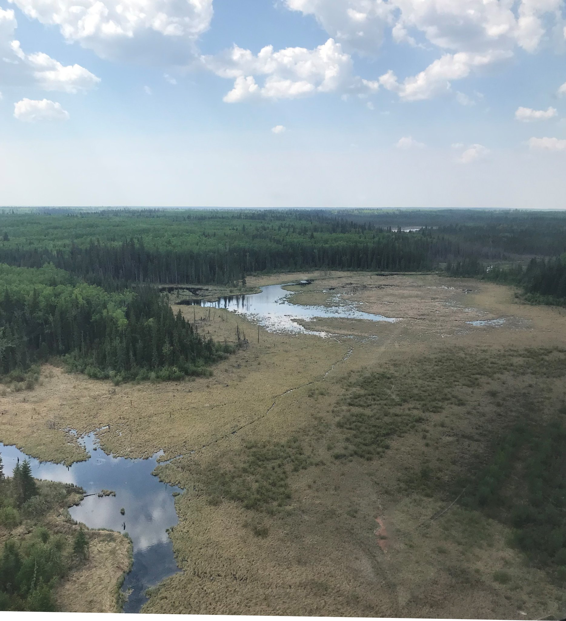 Near Peace River, Alberta, the good 2017 Spring wetland conditions have deteriorated this Spring of 2018. Note the depressed water levels in this wetland complex. (USFWS photo by Jim Bredy)