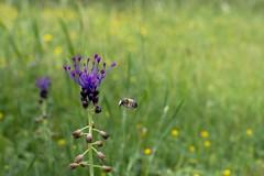 Spring flowers near Pégairolles-de-Buèges, Languedoc Roussillon, France