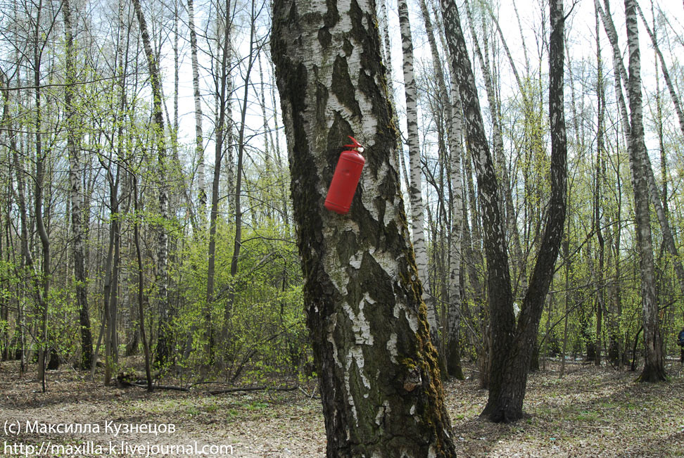 Береги лес от пожара