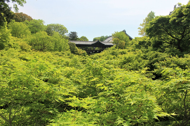 tofukuji-gaunkyo010