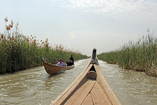 Marshes, South of Iraq.