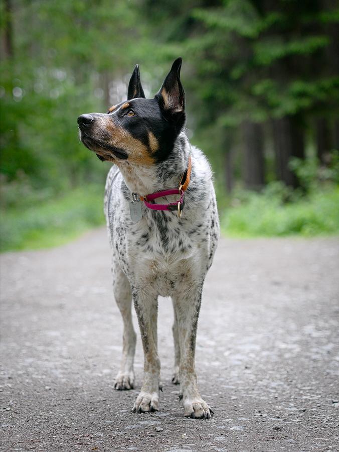 odszkodowanie szkoda wyrządzona pies rolnika