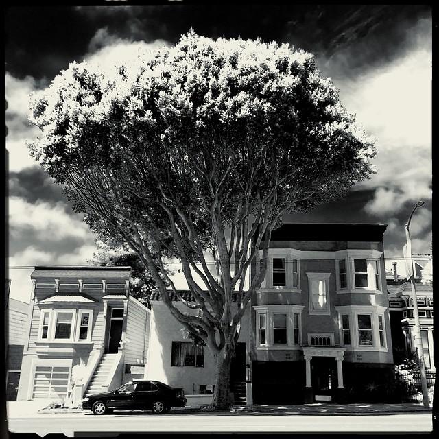 one tree avenue