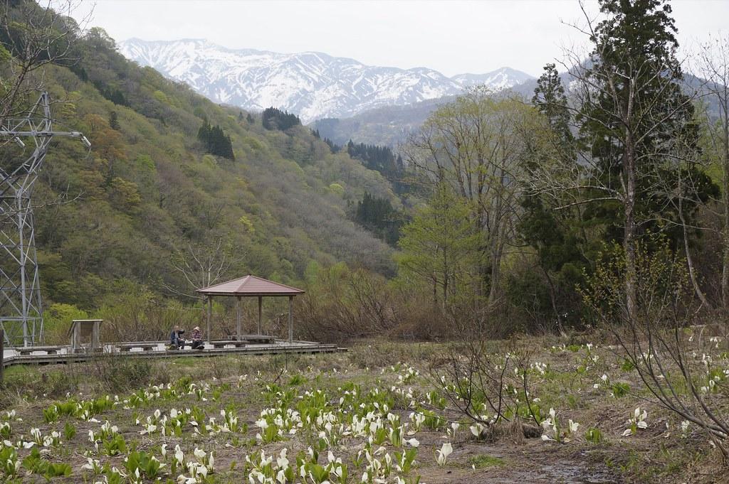 """Mizubasho of the """" orchard"""