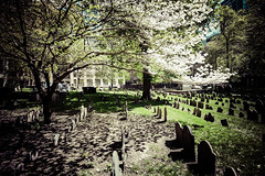 Granary Burying Ground, Boston 5/9/18 #cemetery #revolutionarywar #freedomtrail #bostonmassacre #trees #shadows