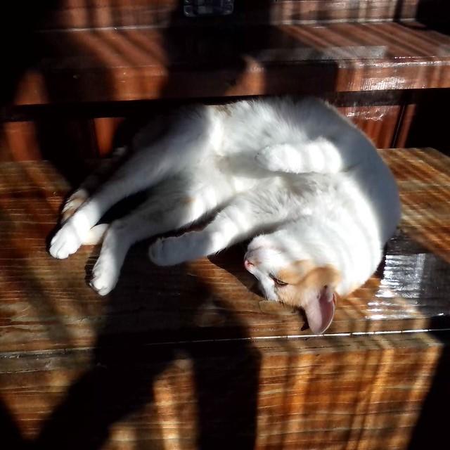 Felix_sleep_1