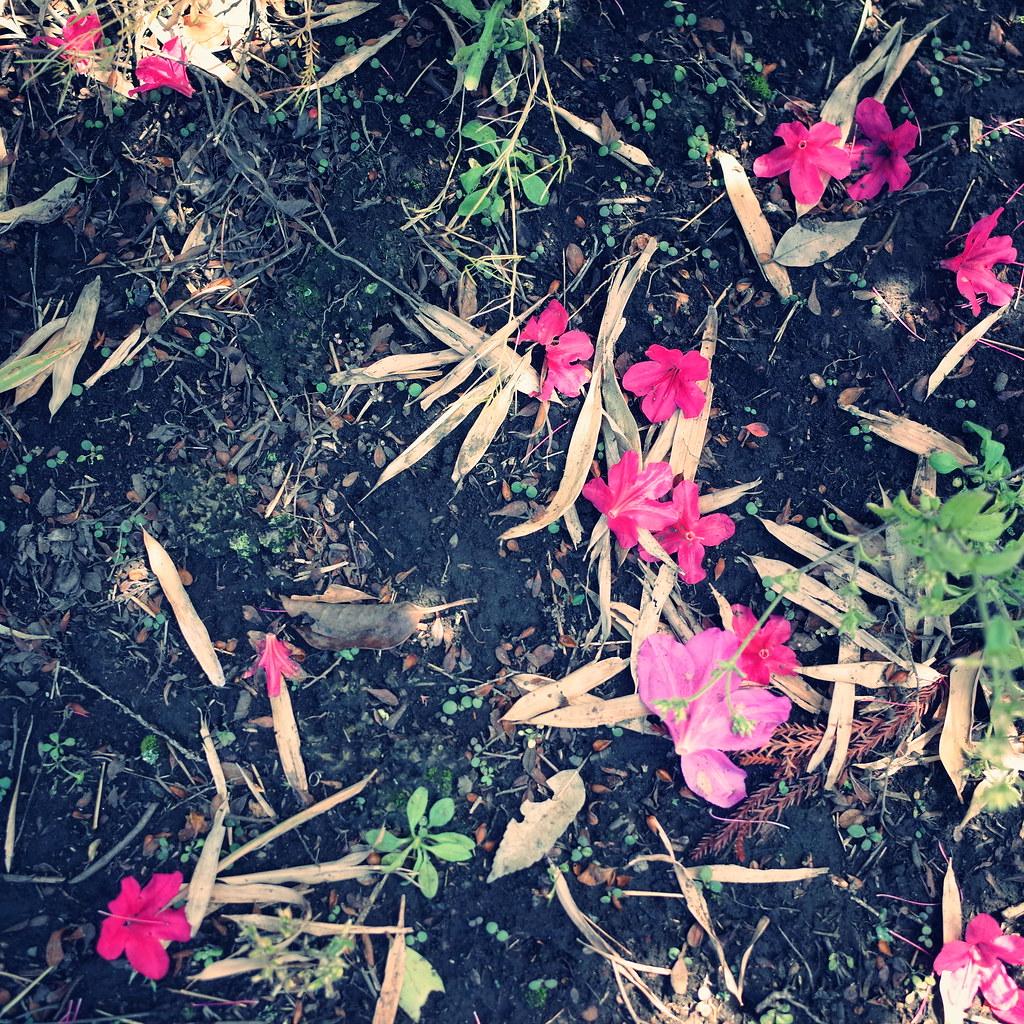 flower abscission