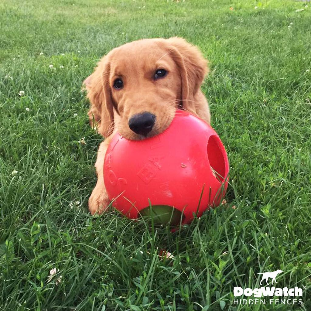 Hidden Dog Fence Customer Photo Gallery   DogWatch® of Cedar