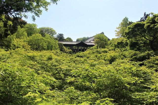 tofukuji-gaunkyo005