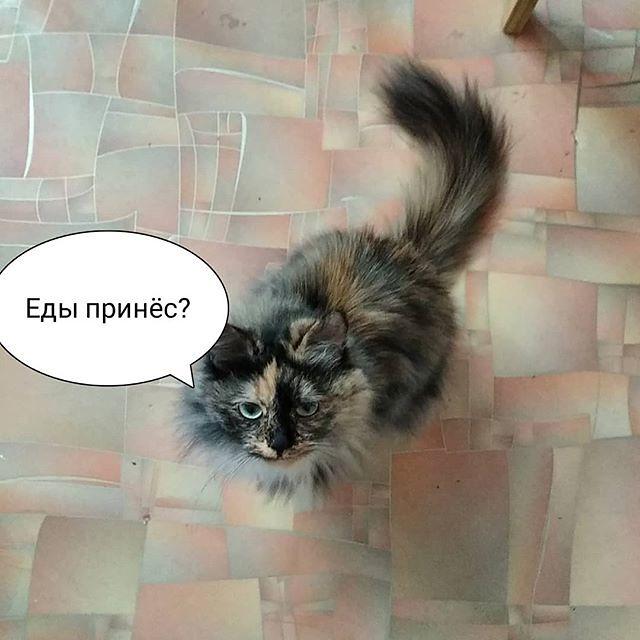 Кошка Соня™ просто смотрит так, что ей всё отдашь. А был кот, так тот натурально у мамы сумку проверял, когда она домой с работы приходила. Хотя... Наши тоже, бывало, у гостей сумки потрошили. А потому что пахнет! Вкусно пахнет! Вот они и успевали, пок