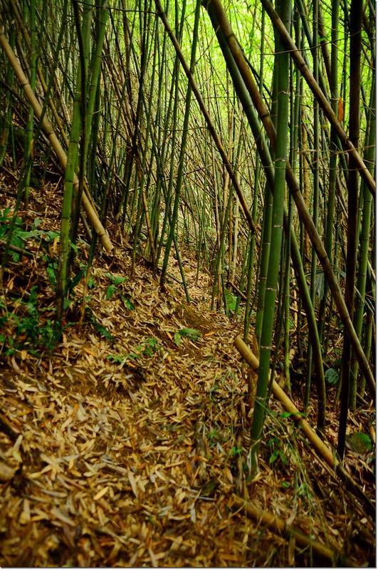 八子龍山竹林小徑