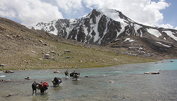 Flußdurchquerung mit Mulis