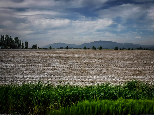 Samish Flats Fields-002