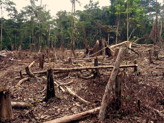 deforestation_in_the_amazon