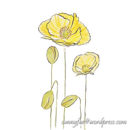 yellow poppy sketch 2