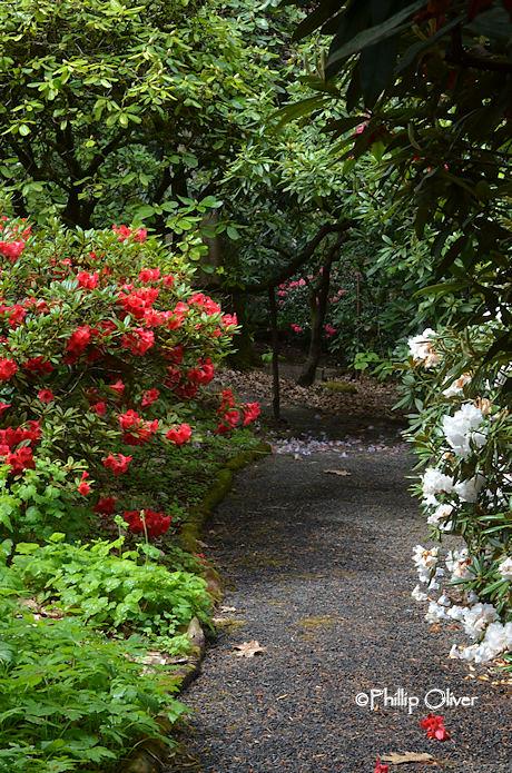 cecil-smith-garden-13