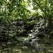 In the rainforest / В тропическом лесу por Vladimir Zhdanov