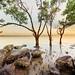 Mangroves under a hazy atmosphere by Louise Denton