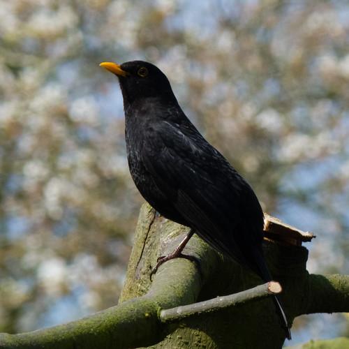 Blackbird lookout