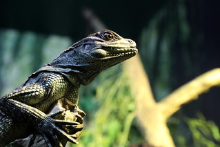 lizard_in_the_undergrowth_5Div3906