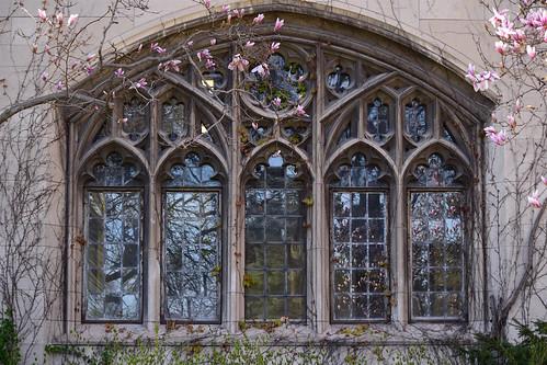 Gothic window with magnolias