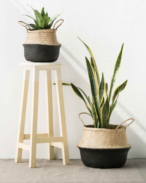 Segrass basket from Nicobar as plant container