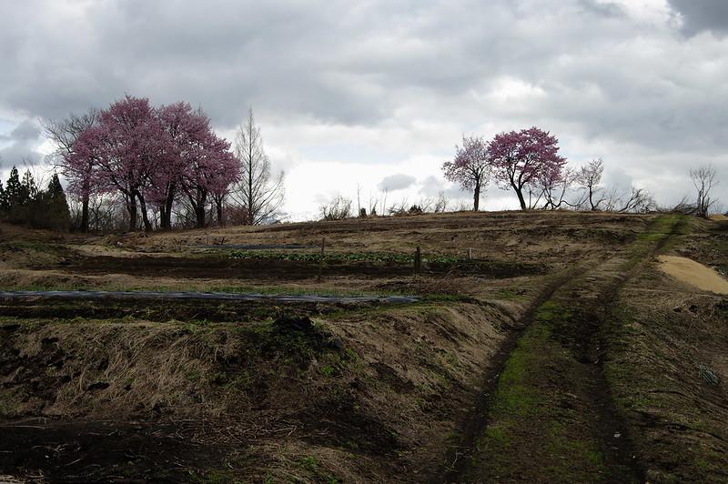 桜のある風景 #2_201804