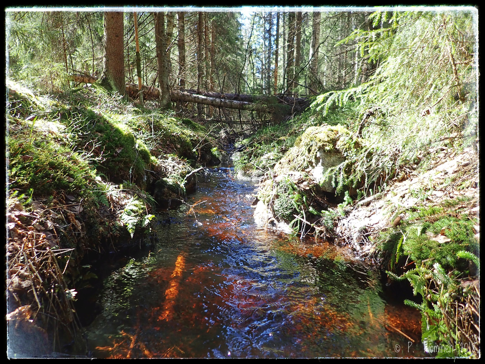 Stream from Kintulammi