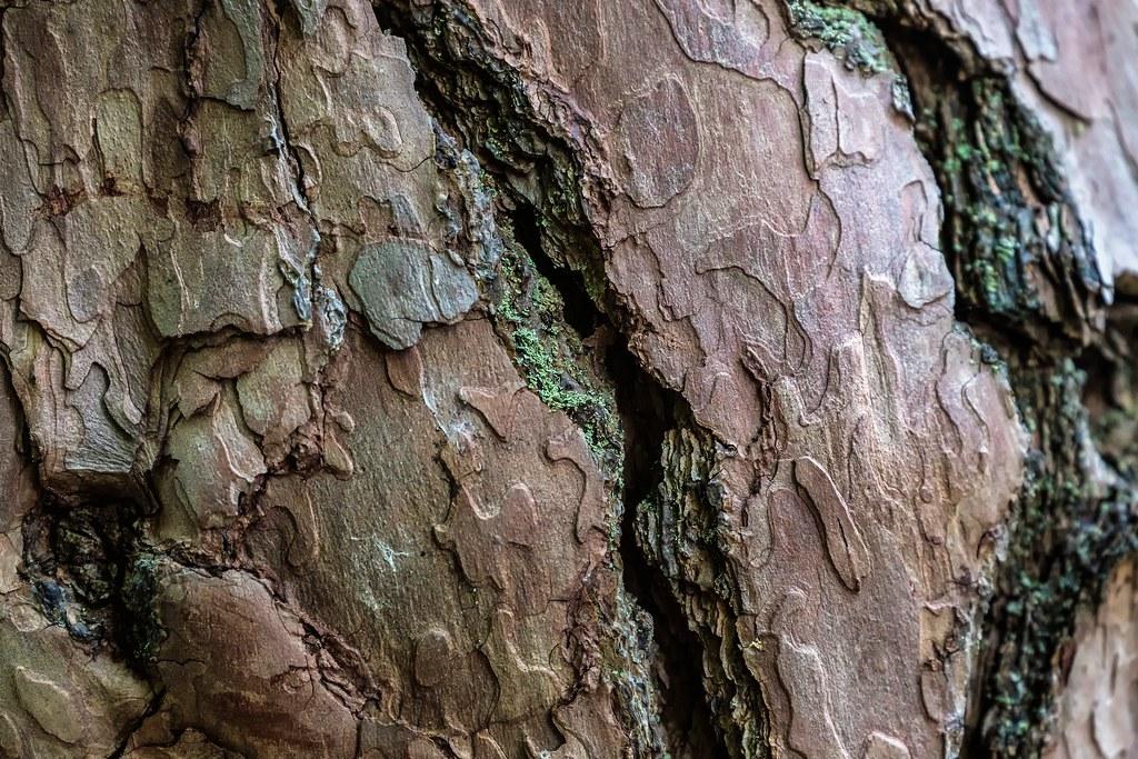 Furrow Bark