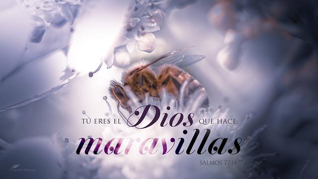 Tú eres el Dios que hace maravillas