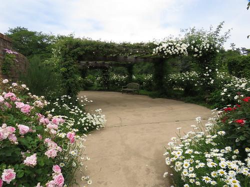 【写真】たくさんのバラがお出迎え。東武トレジャーガーデンに行ってきました!