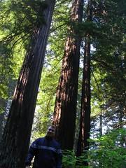 Ken, Lady Bird Johnson Grove, Redwoods National Park, California